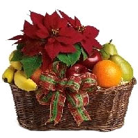 New Year Poinsettia Plant With Fresh Fruit